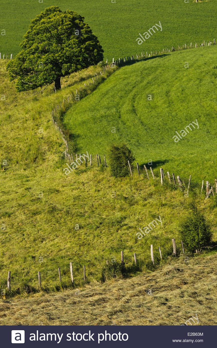 France, Aveyron, Rouergue Rieupeyroux, pastures of Segala - Stock Image