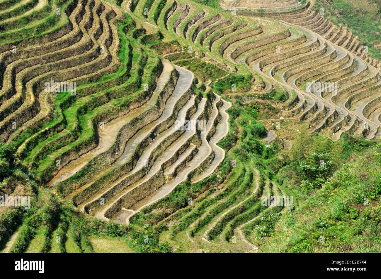 China, Guangxi Province, Longsheng, rice terraces at Longji - Stock Image