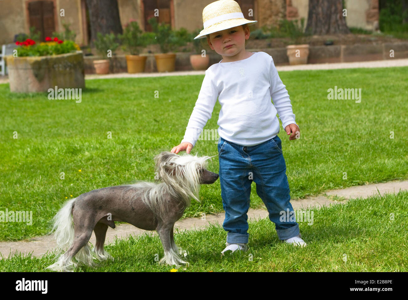 France, Bas Rhin, Thanville, Chinese Crested Dog (Canis lupus familiaris) - Stock Image