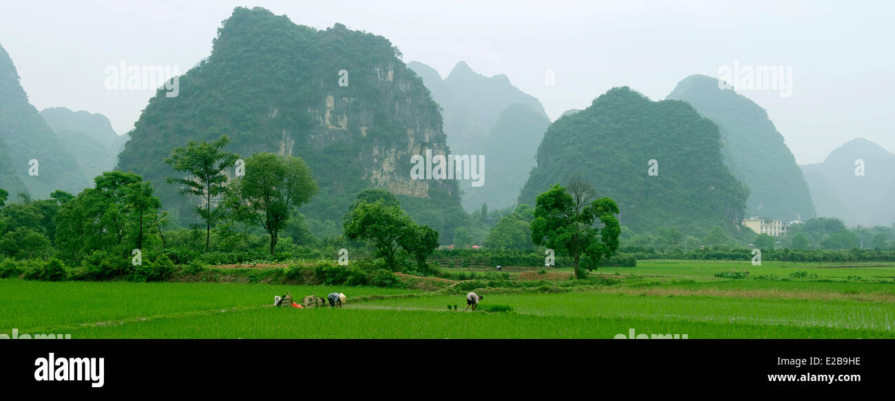 China, Guangxi province, Guilin region, Karst mountain and rice field landscape around Yangshuo Stock Photo
