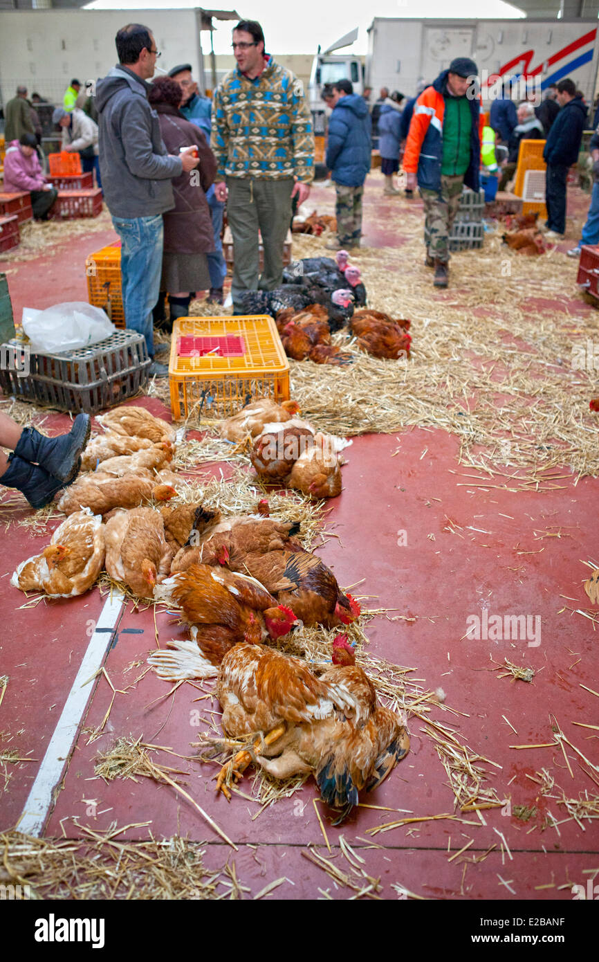 France, Gers, Samatan, poultry market - Stock Image