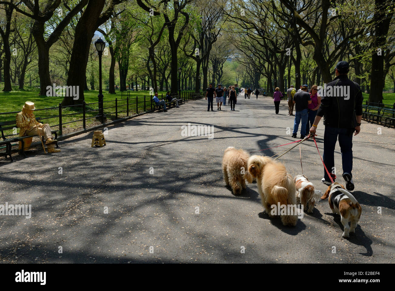 United States, New York City, Manhattan, Central Park, Francesco professional dog walker on The Mall and Literary - Stock Image
