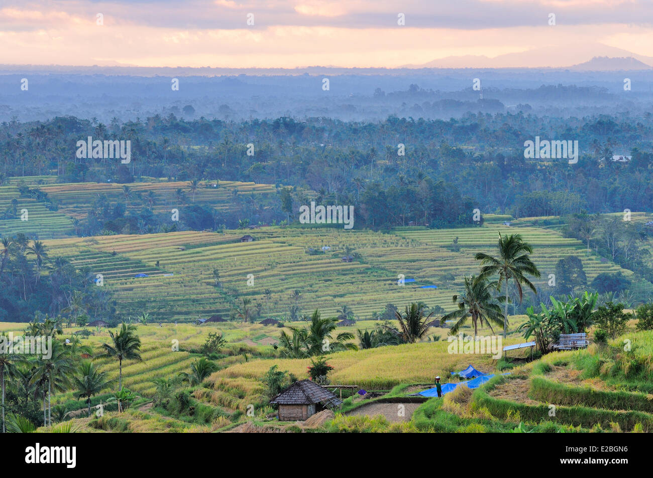 Indonesia, Bali, the rice fields of Jatiluwih, the subak system, listed as World Heritage by UNESCO, cooperative - Stock Image