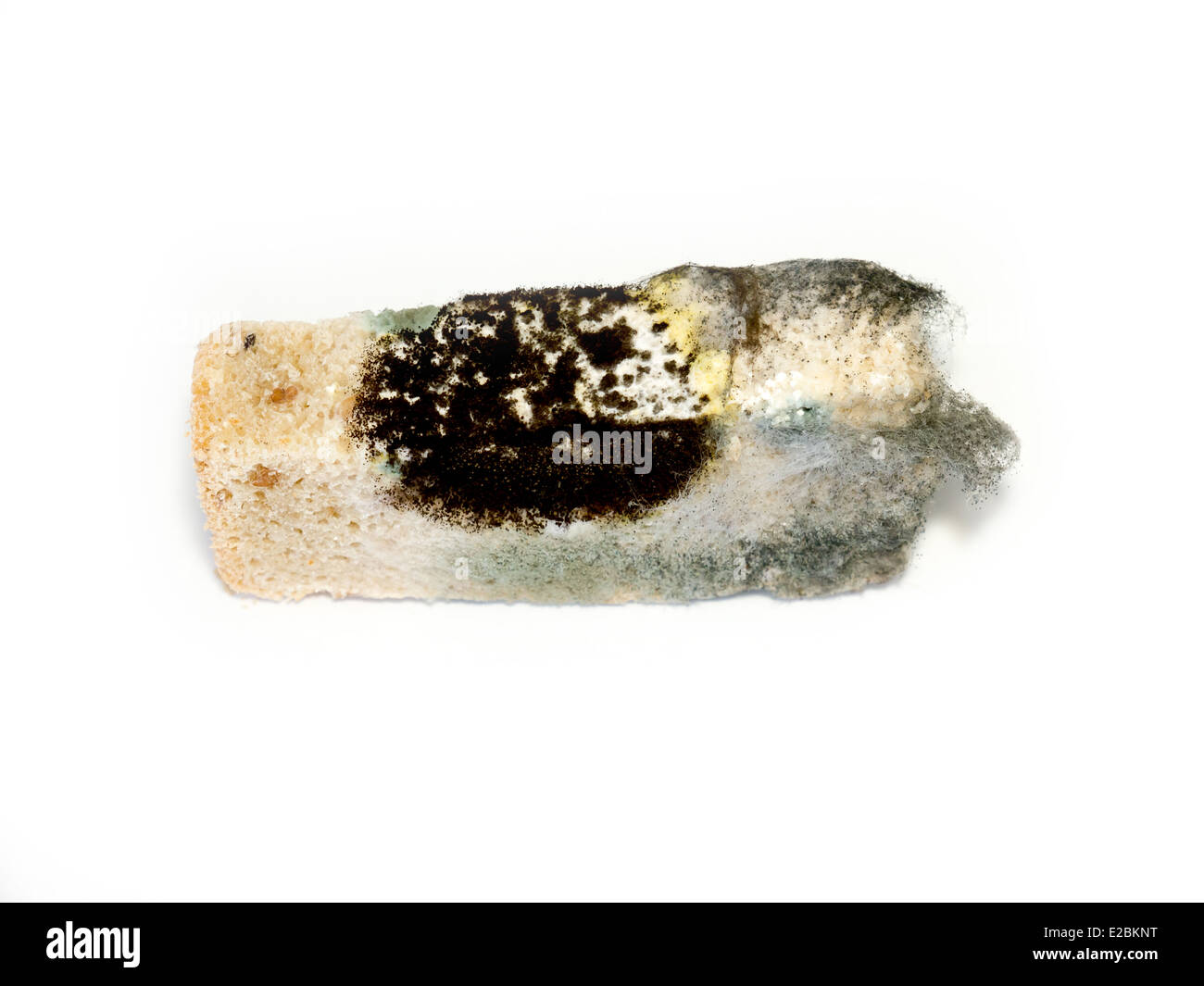 Moldy bread. - Stock Image