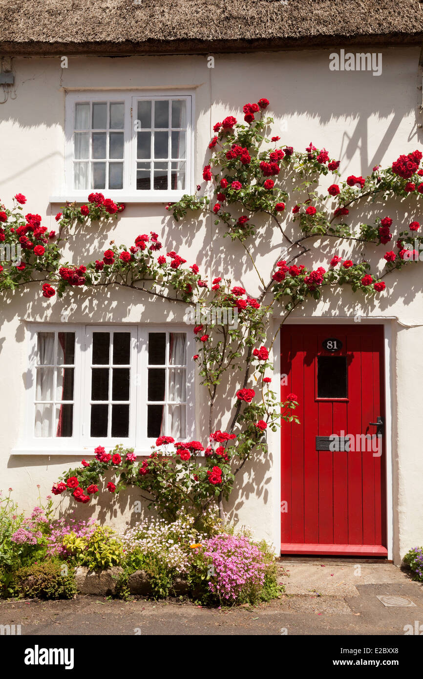 Red Climbing Rose In Flower On A White Cottage House