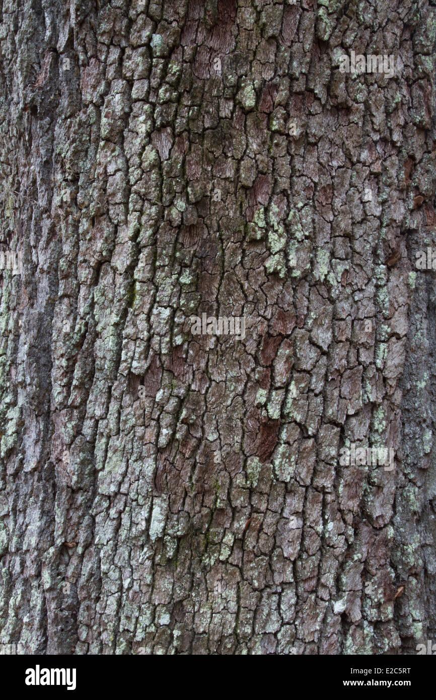 Textured tree bark background. - Stock Image