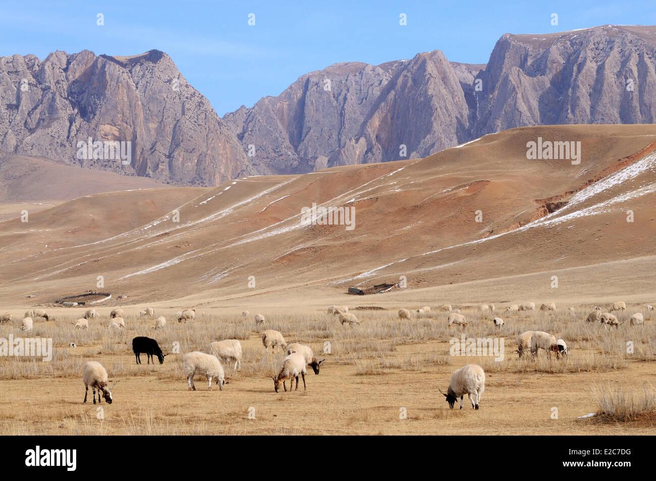 China, Gansu Province, Amdo, Xiahe county, Ganjia meadows - Stock Image