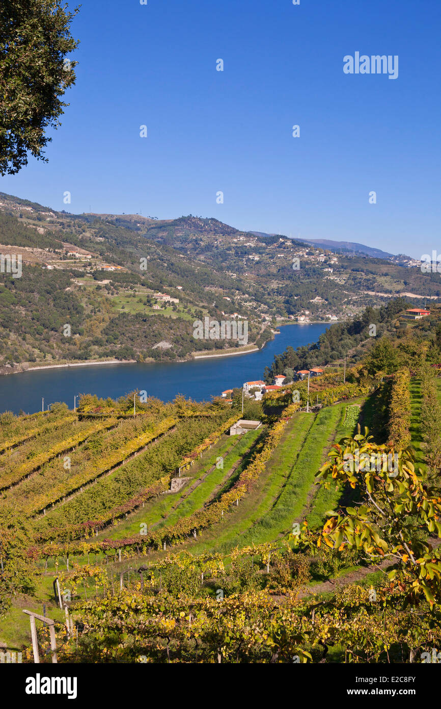 Portugal, Norte Region, Douro Valley listed as World Heritage by UNESCO, near Porto, vineyard closed to Areade - Stock Image