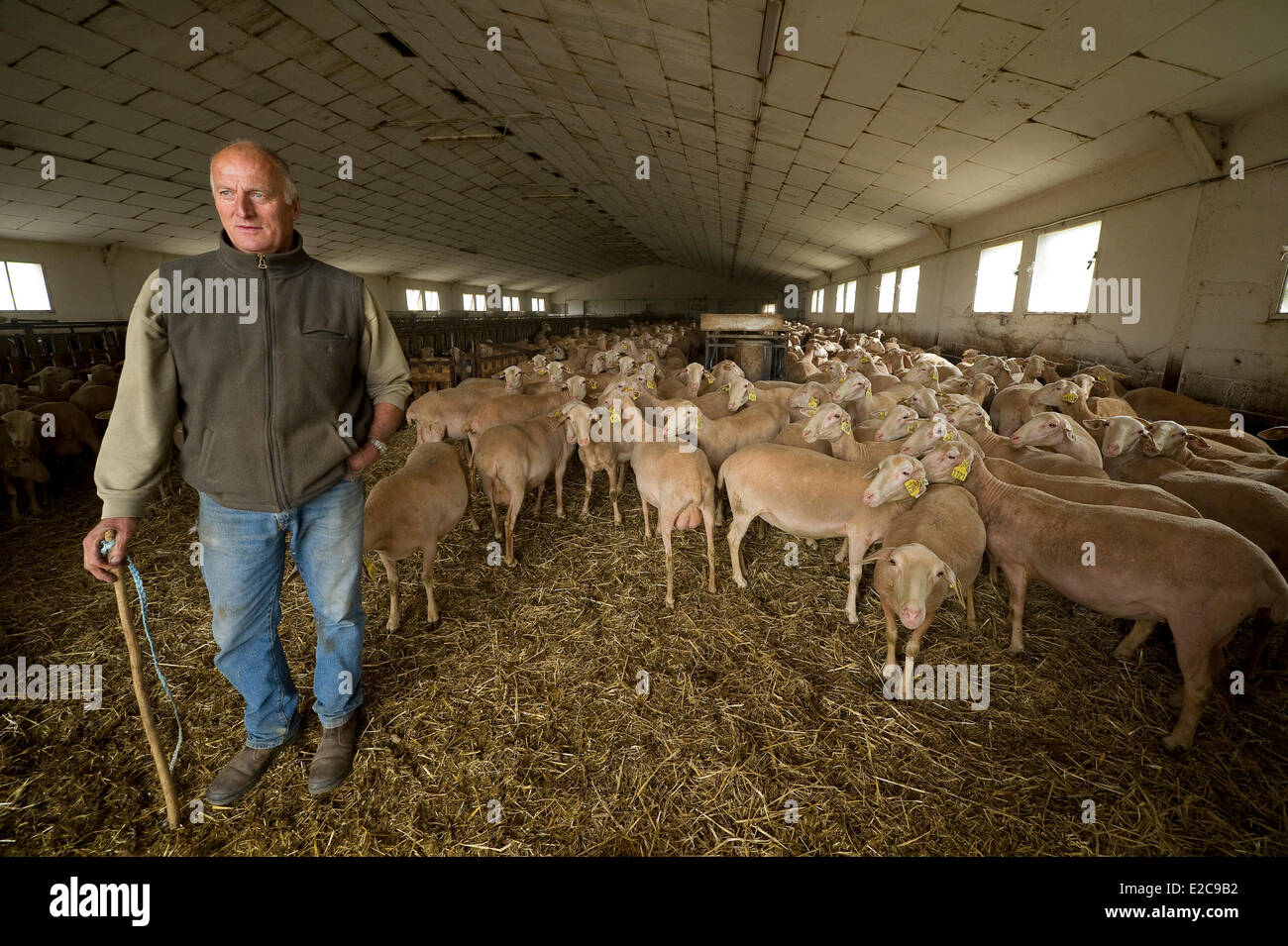 France, Aveyron, Hermilix, sheep farm Jean Louis Ricard and Alice - Stock Image