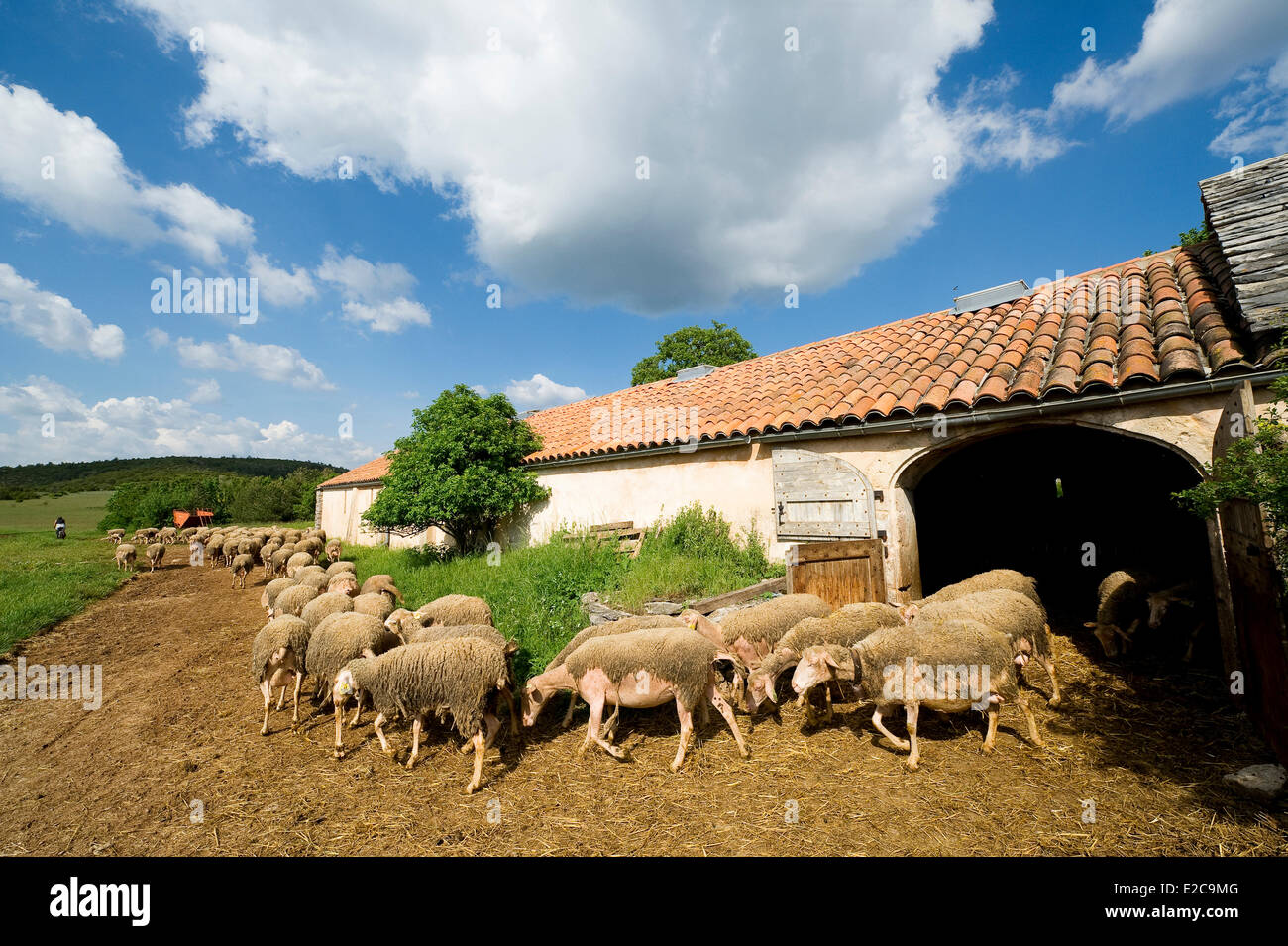 France, Aveyron, Saint Martin du Larzac, plateau of Larzac, sheep farm of Chantal Alvergnas and Thomas Lesay - Stock Image