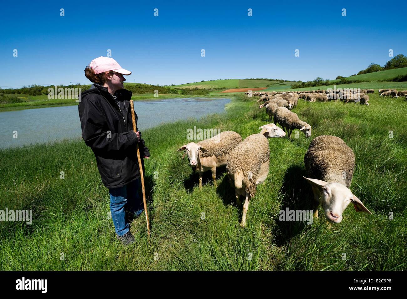 France, Aveyron, La Rouquette, the shepherd Severine Boudes and his flock - Stock Image