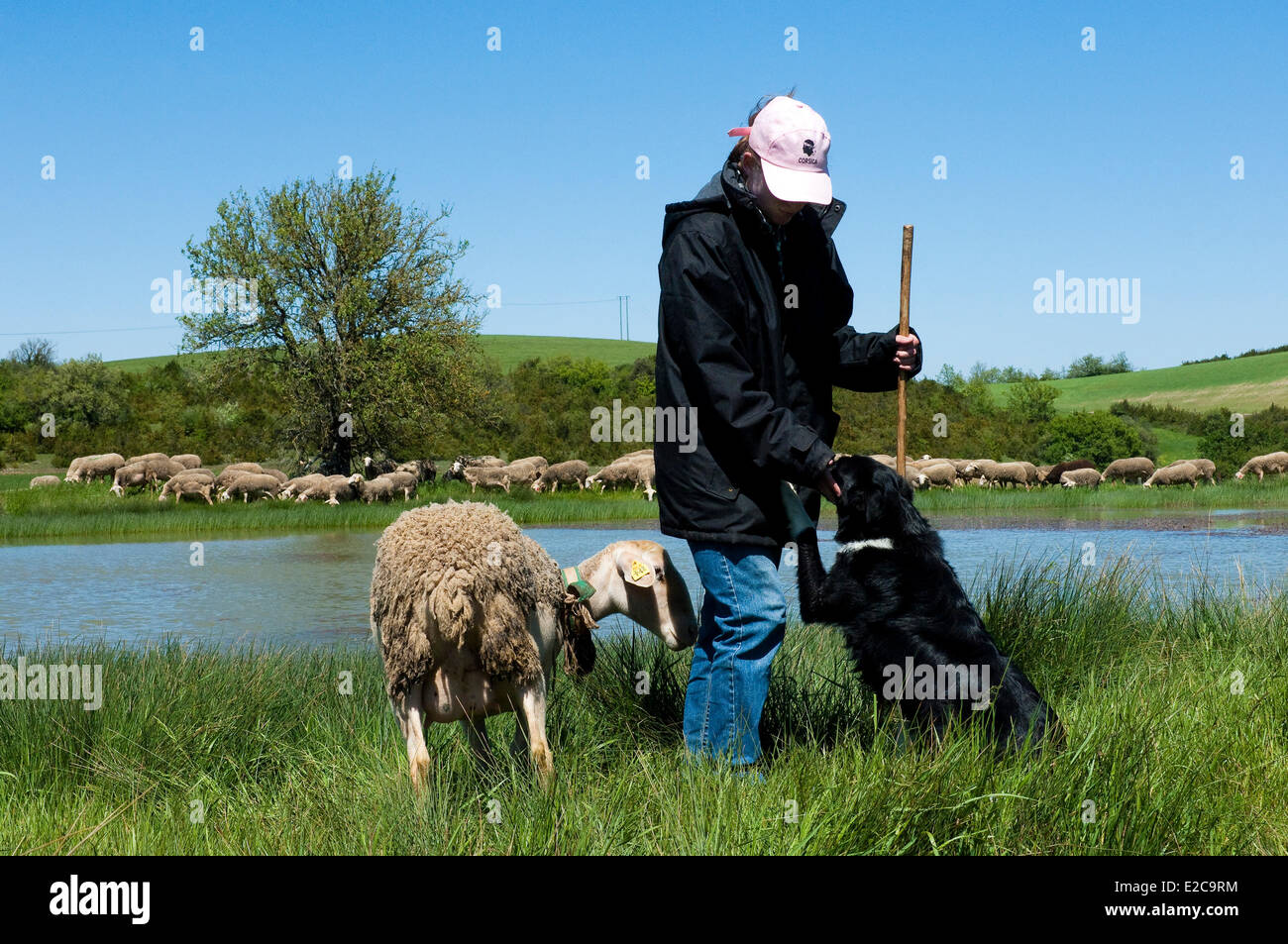 France, Aveyron, La Rouquette, the shepherd and his flock Severine Boudes - Stock Image