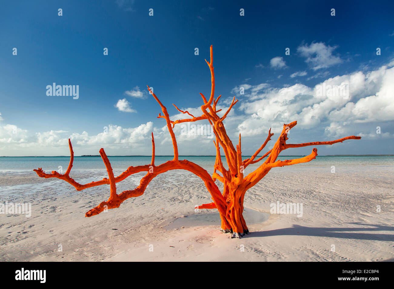 Bahamas, Harbour Island, Lone Tree - Stock Image