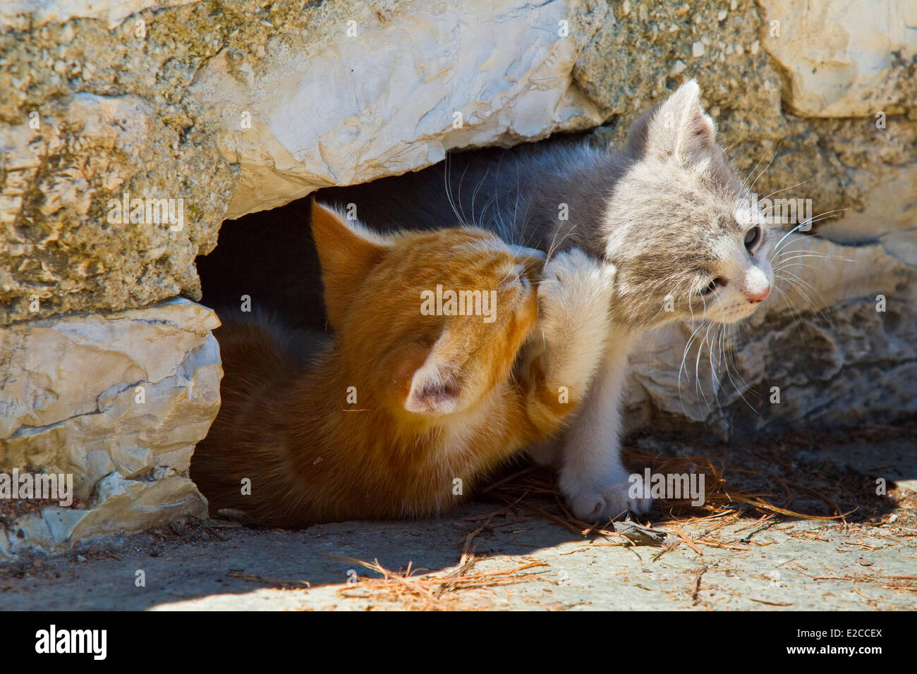 Greece, Thessaly, Meteora monasteries complex, listed as World Heritage by UNESCO, kittens - Stock Image