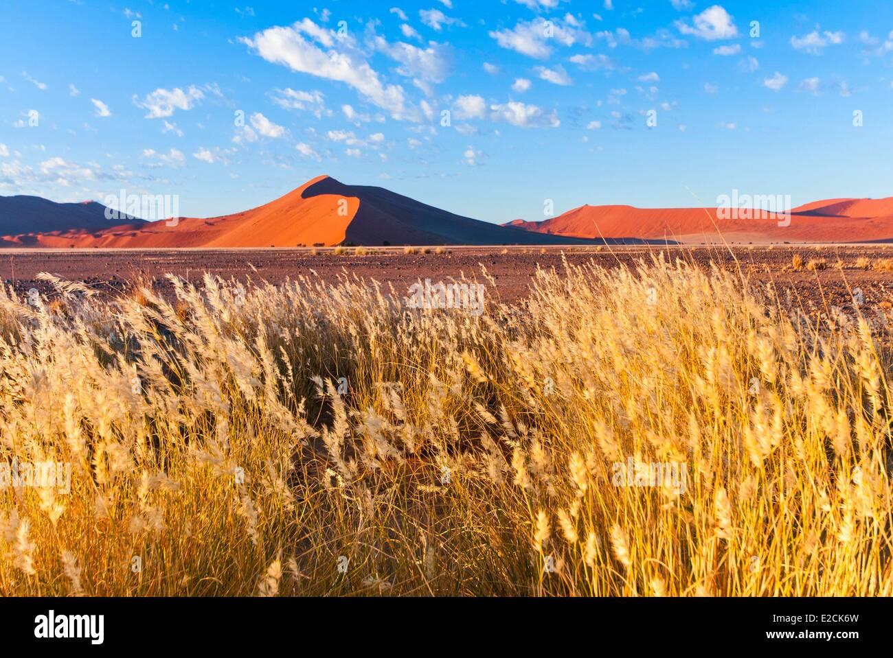 Namibia, Hardap region, Namib desert, Namib Naukluft Park, Sossusvlei, Dune 45, Fox-brush (Aristida Hordeacea) - Stock Image