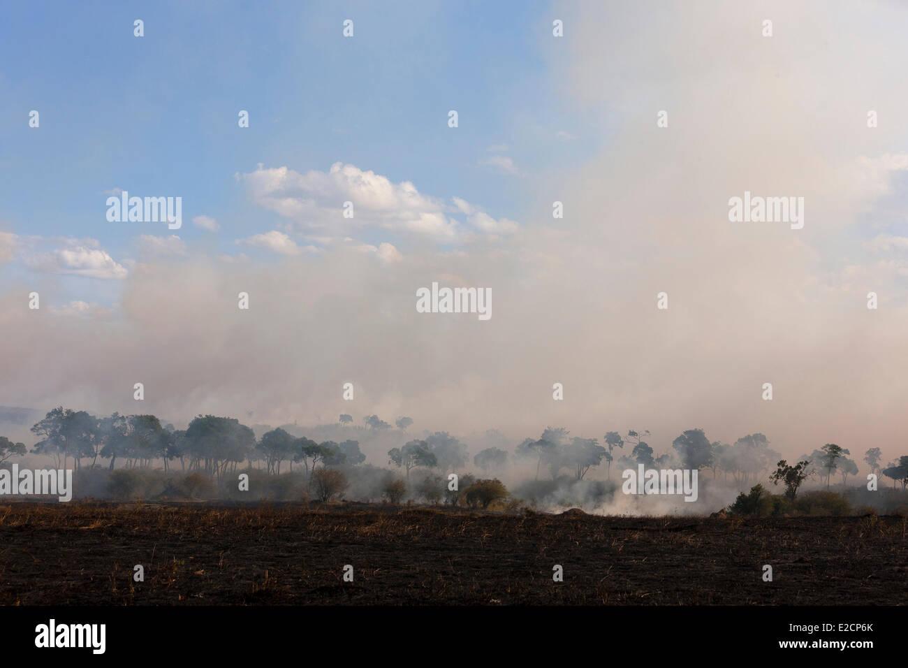 Kenya Masai Mara national reserve bushfire Stock Photo