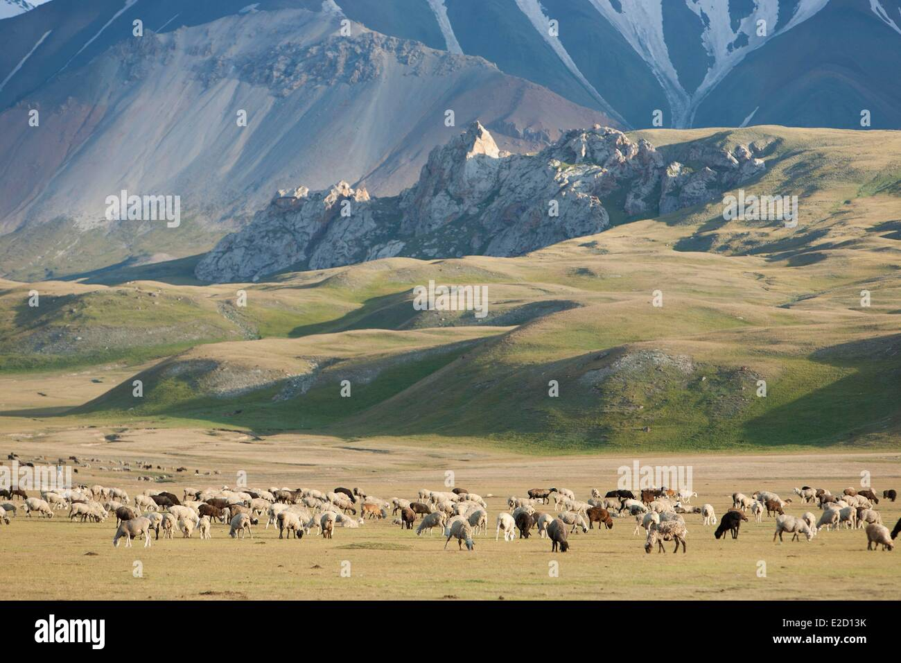 Kyrgyzstan Naryn Province Arpa valley flock of sheeps on summer pastures at the foothills of the Tian Shan mountain - Stock Image