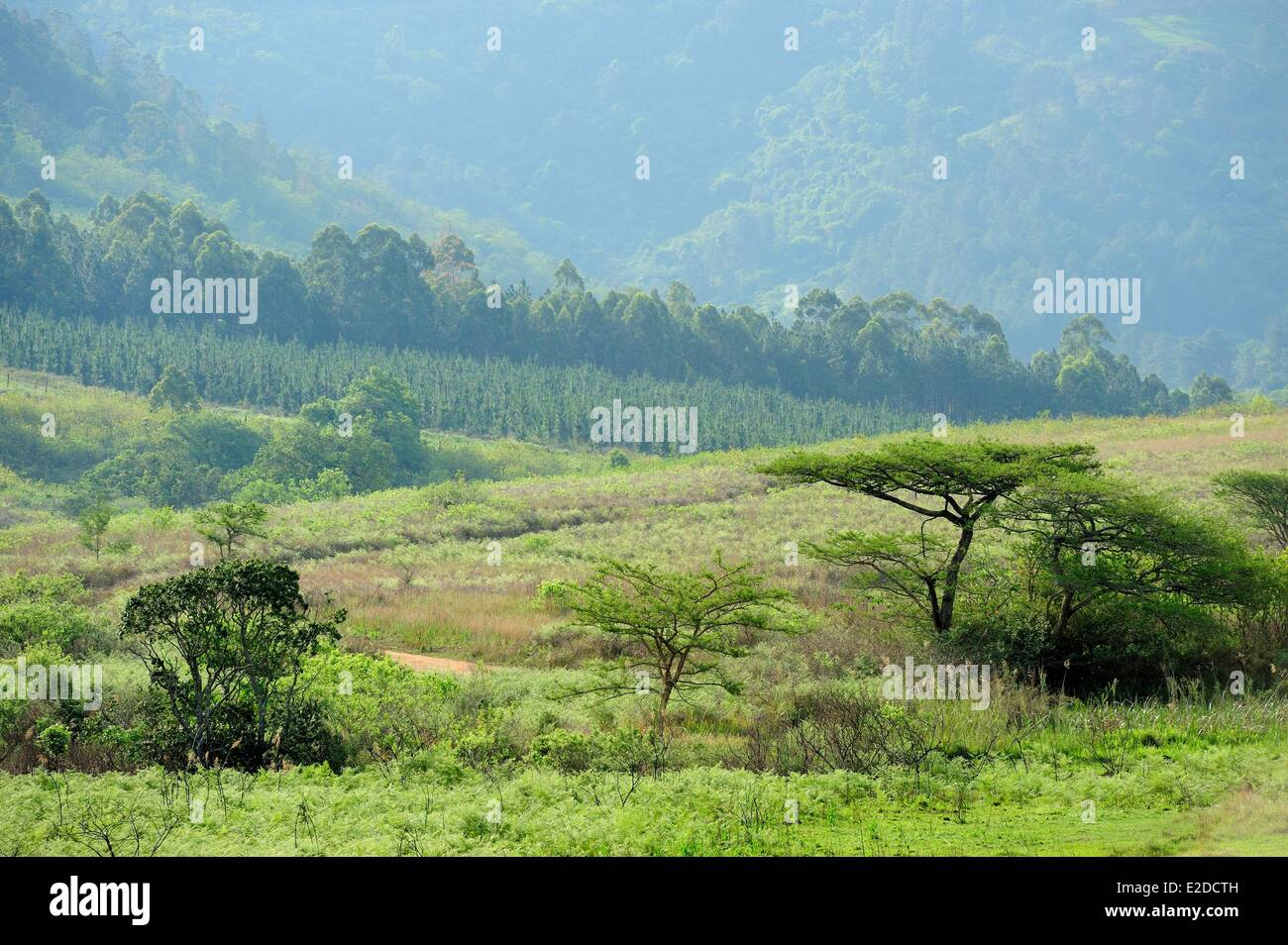 Swaziland Hhohho district Ezulwini valley (valley of Heaven) Mlilwane Wildlife Sanctuary - Stock Image