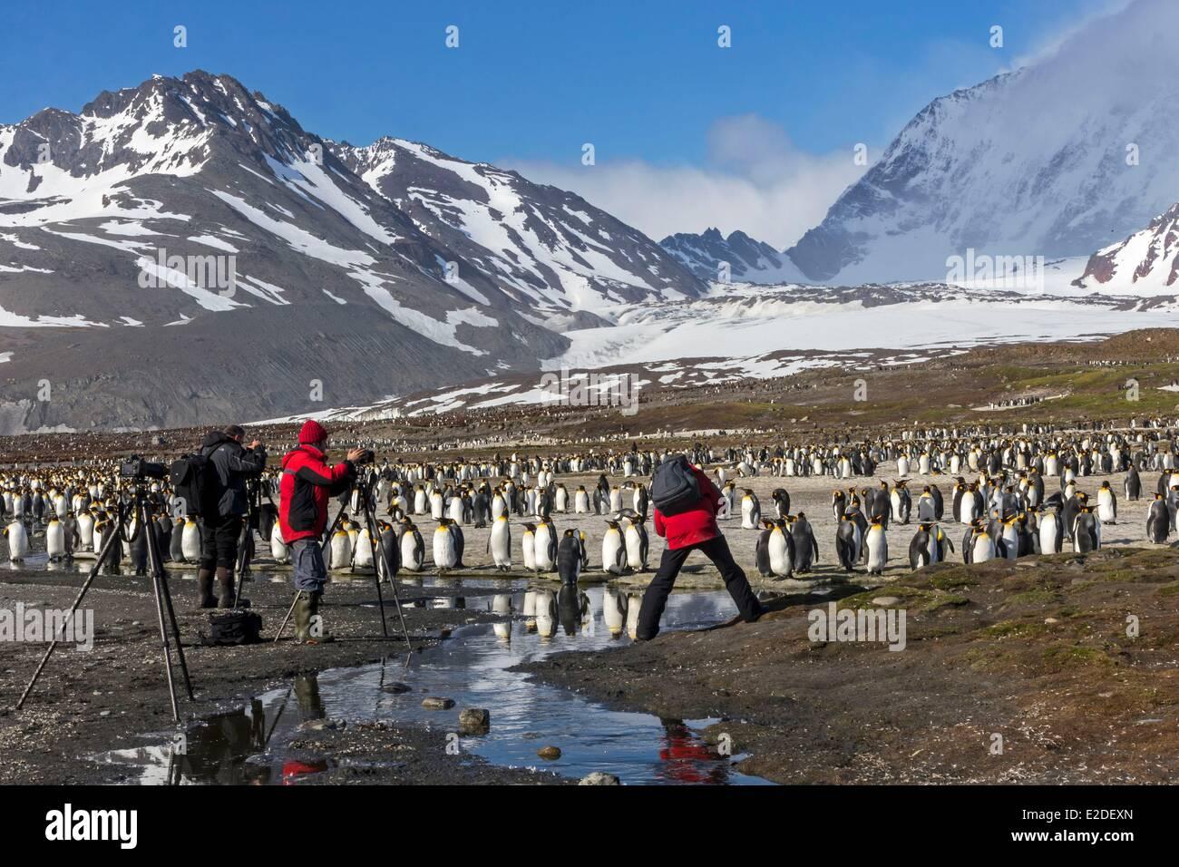 Antarctic South Georgia Island Saint Andrews plains King Penguin (Aptenodytes patagonicus) adult - Stock Image
