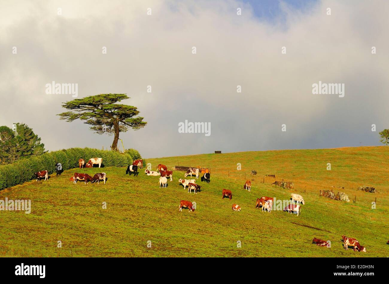 New Zealand, North Island, Egmont national park, landscape at the foot of the volcano Tanaraki - Stock Image