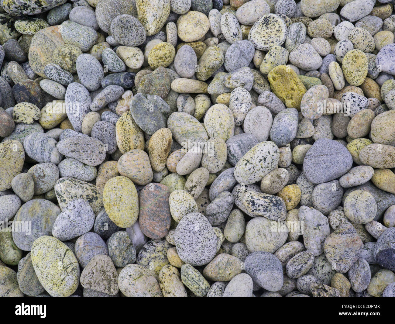 Different coloured examples of gneiss cobbles metamorphic rocks on Outer Hebrides beach - Stock Image