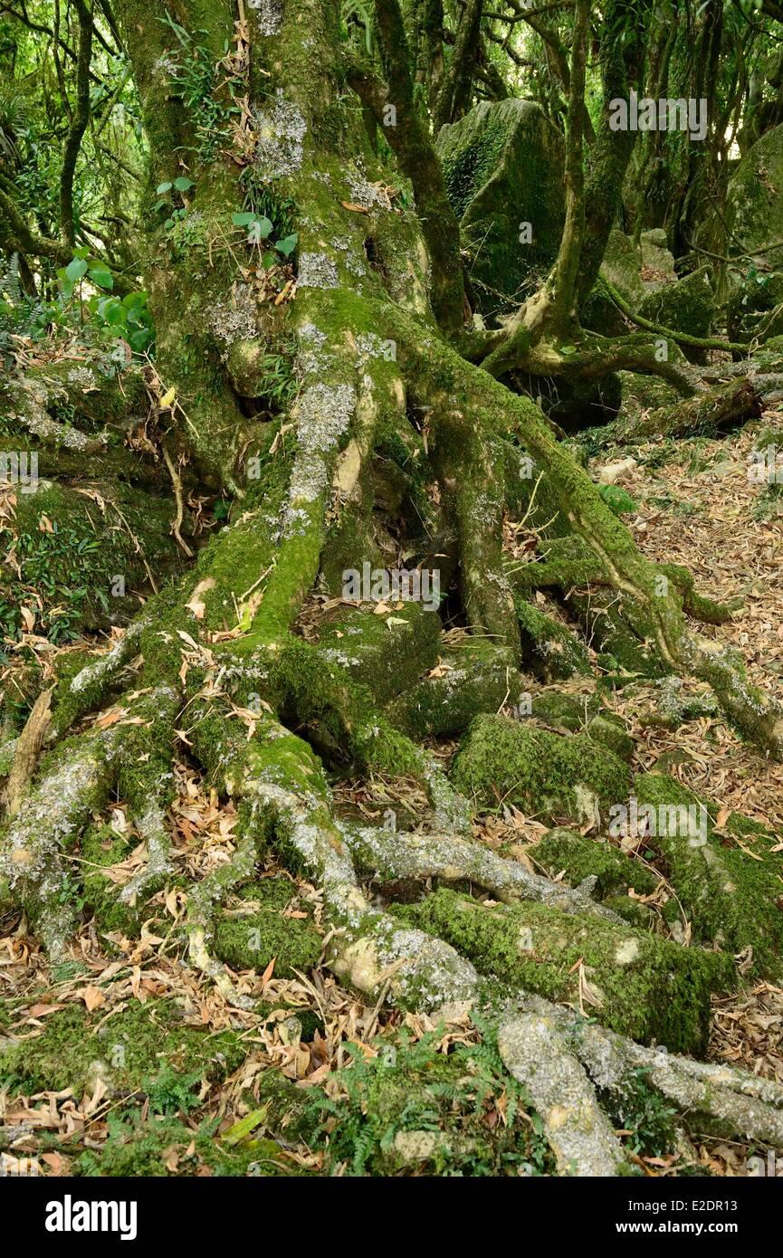 New Zealand North island Waikato region Piopio near Waitomo scenes from the movie The Hobbit were filmed in the - Stock Image