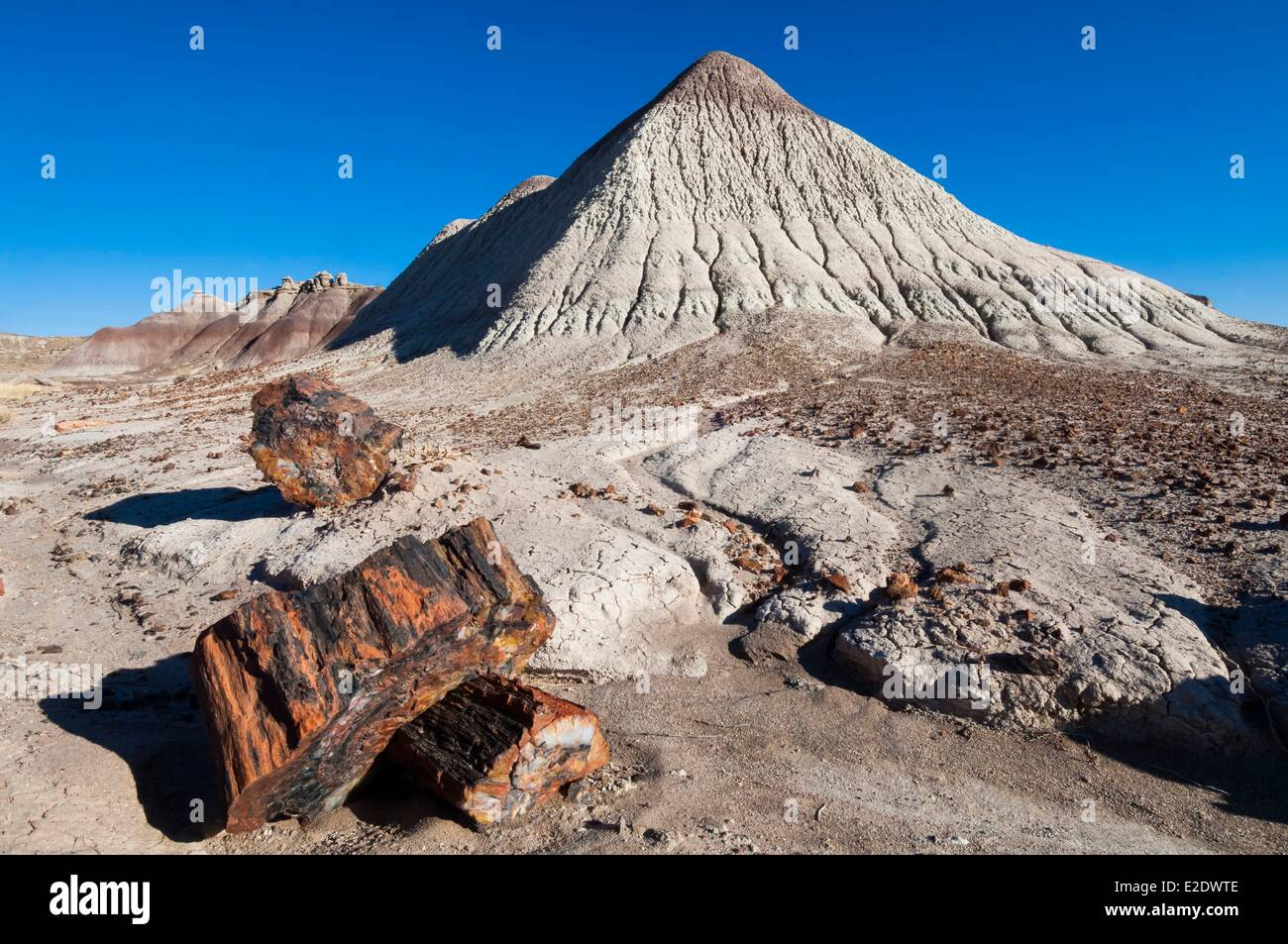 United States Arizona Petrified Forest National Monument fossilized tree - Stock Image