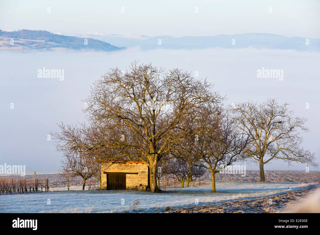 France Puy de Dome shed and trees in winter Sancy mountains in the background - Stock Image