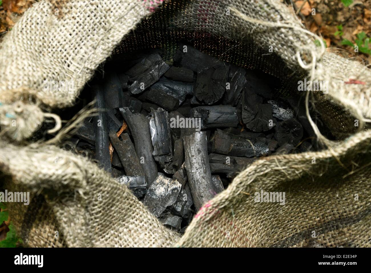 France Jura Chaux forest towards Dole La Vieille Loye Baraques du 14 wood charcoal - Stock Image