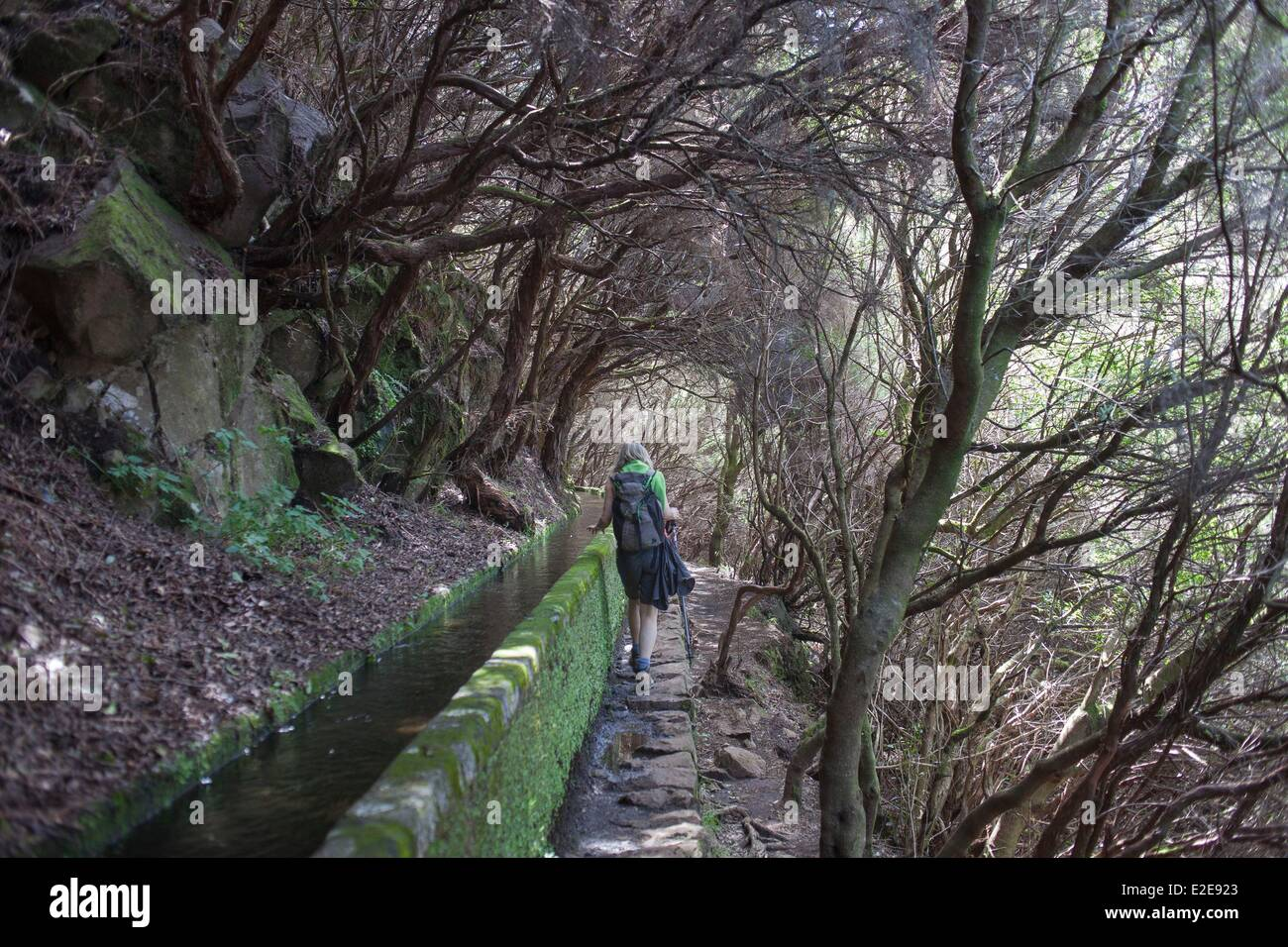 Portugal, Madeira island, hicker on the levada of the 25 springs - Stock Image