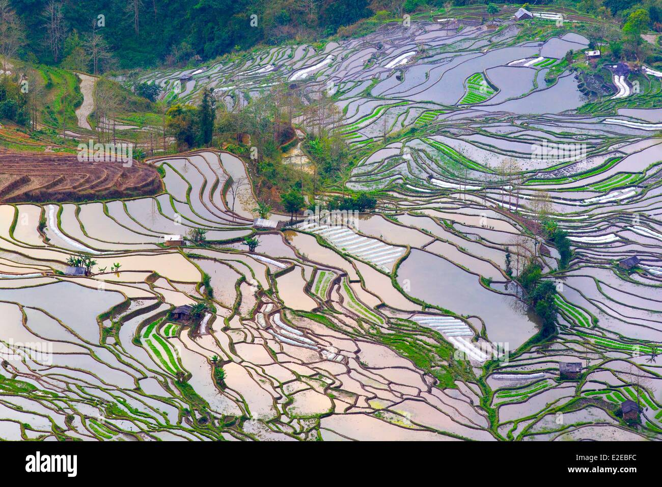 China yunnan province yuanyang cultural landscape of honghe hani china yunnan province yuanyang cultural landscape of honghe hani rice terraces listed as world heritage by unesco sunset at gumiabroncs Image collections