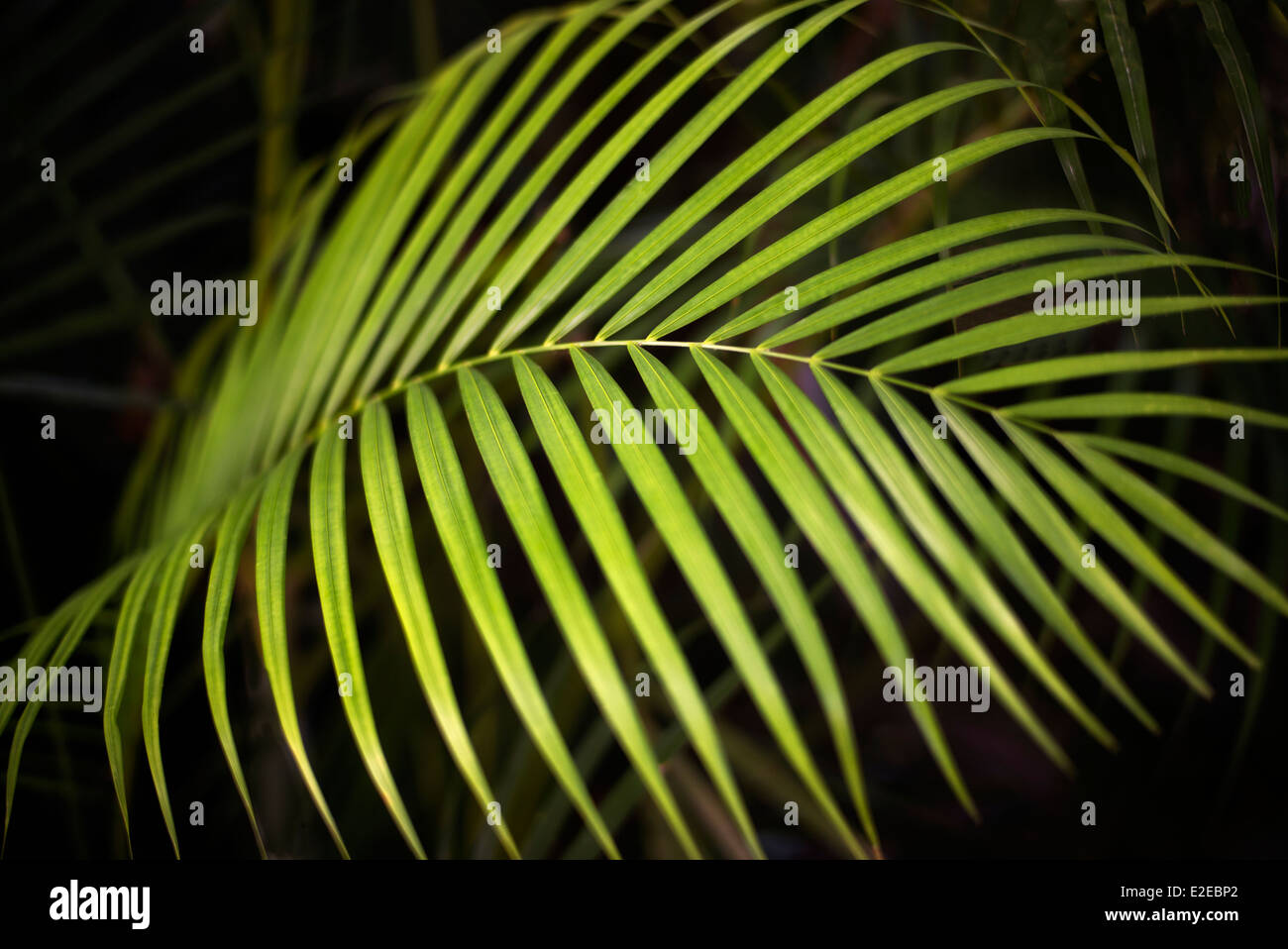 Close up of tropical plant. Mexico - Stock Image