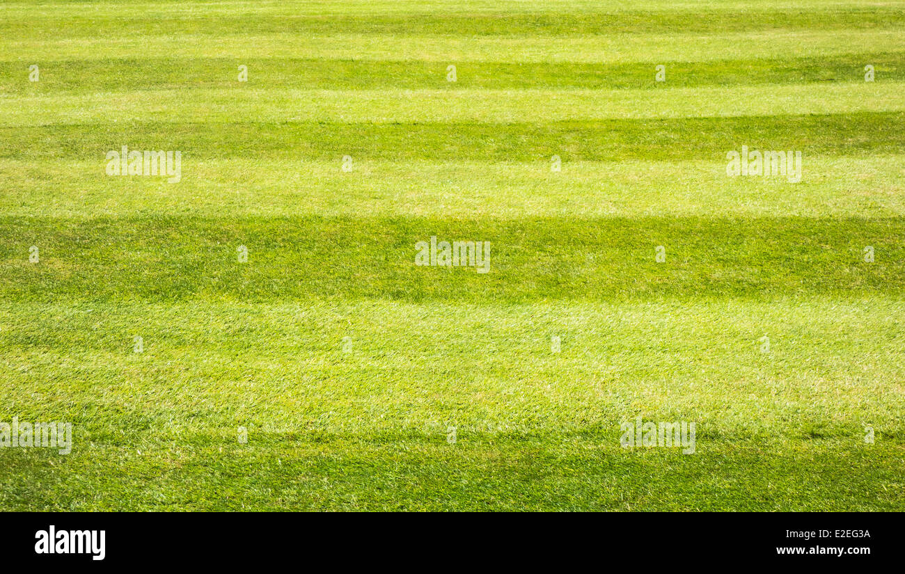Mown grass lawn showing stripes from direction of cut - Stock Image