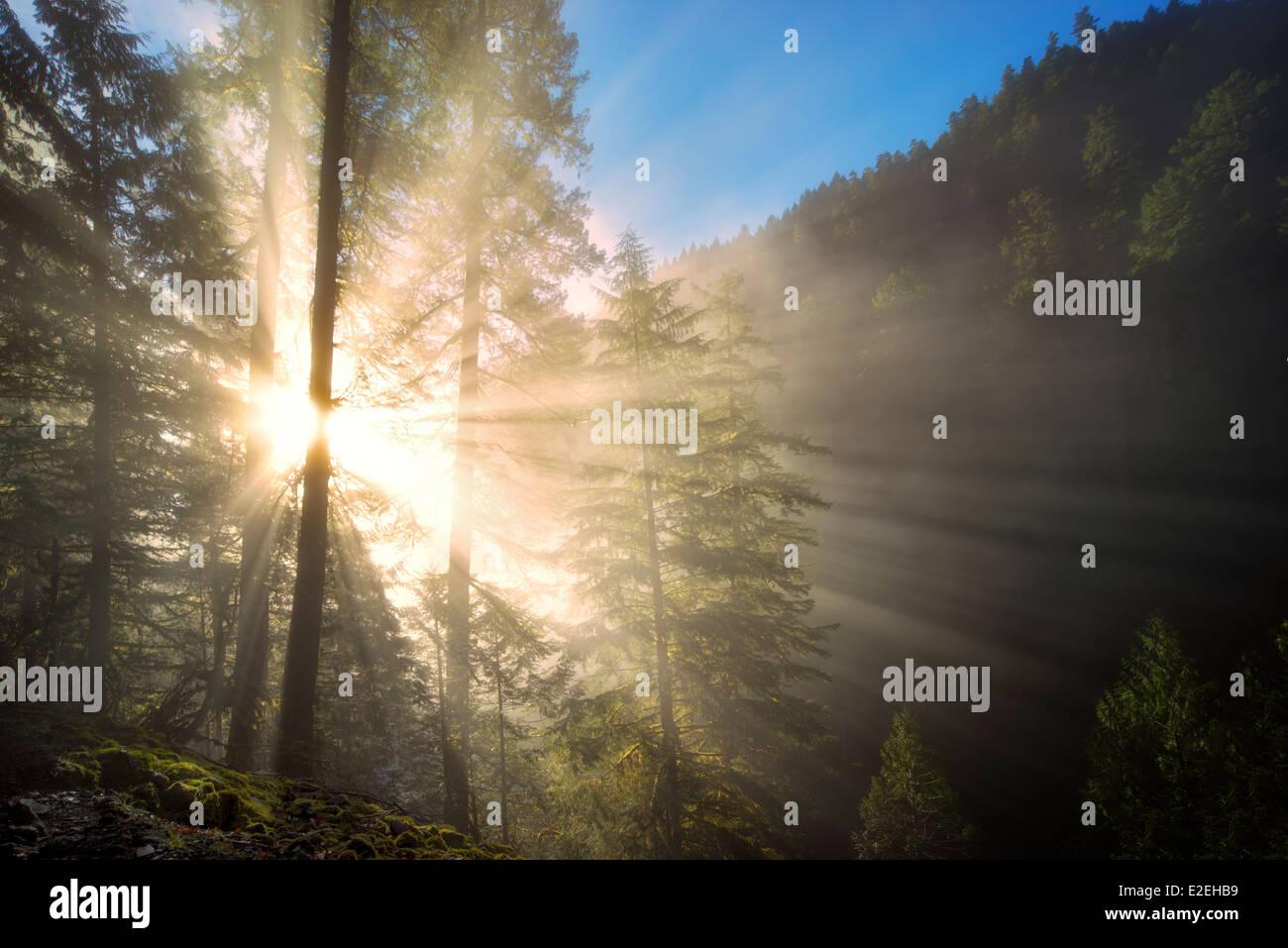Sun rays through fog. Eagle Creek, Oregon - Stock Image