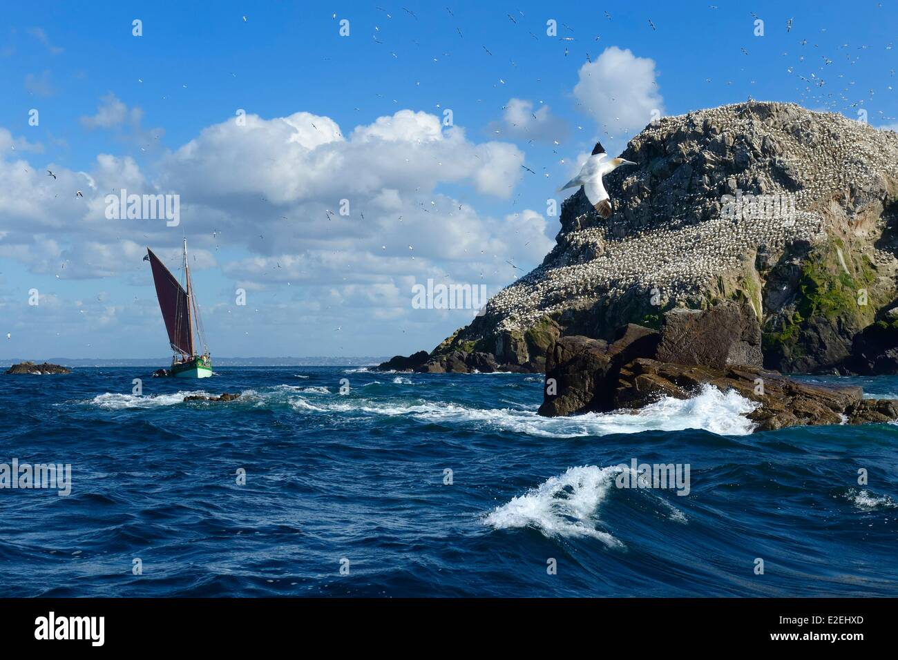 France Cotes d'Armor Perros Guirec Sept Iles Archipelago and bird sanctuary the traditional sailboat Sant C'hireg - Stock Image