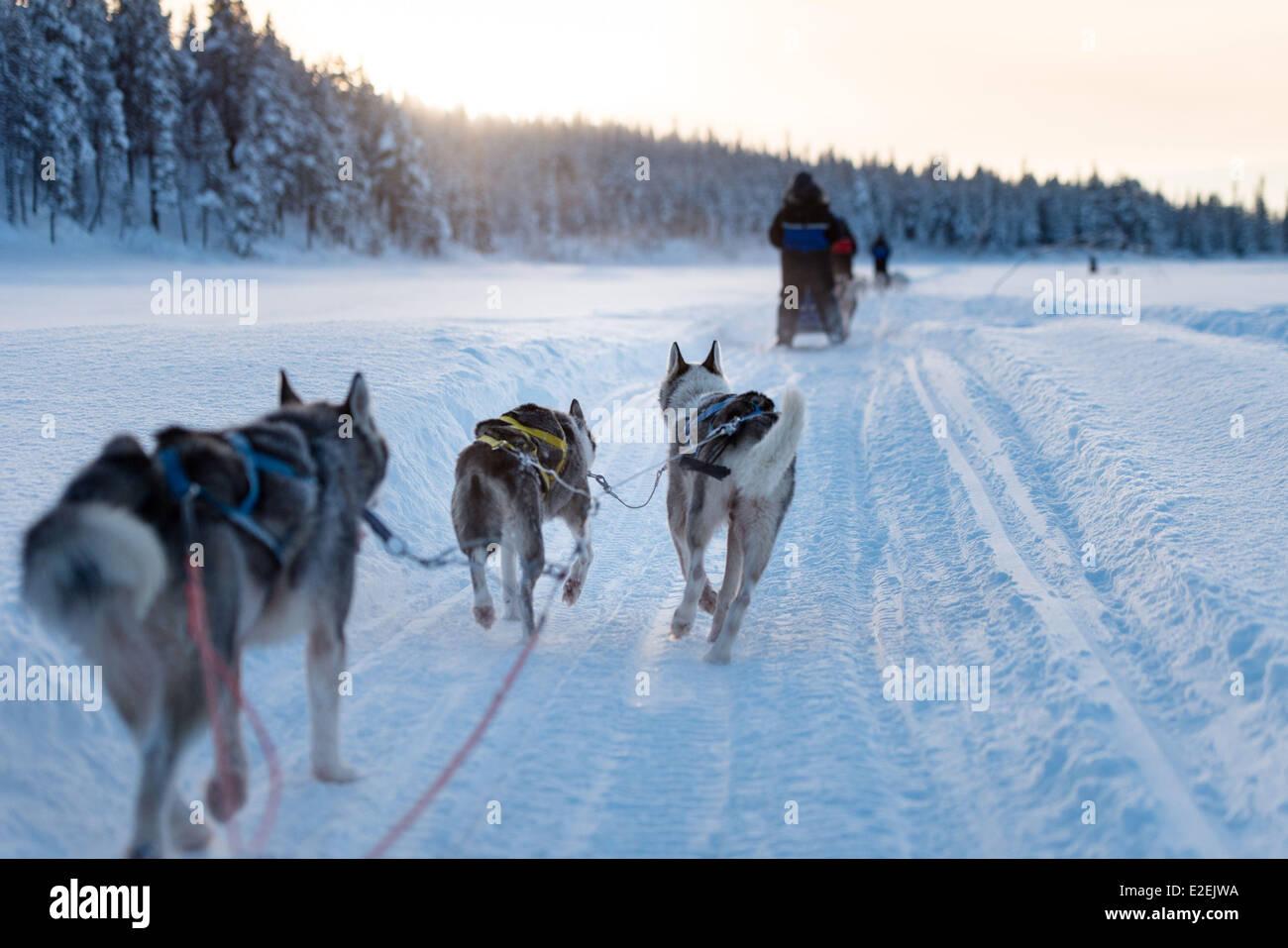 dogging sverige svenska skådisar