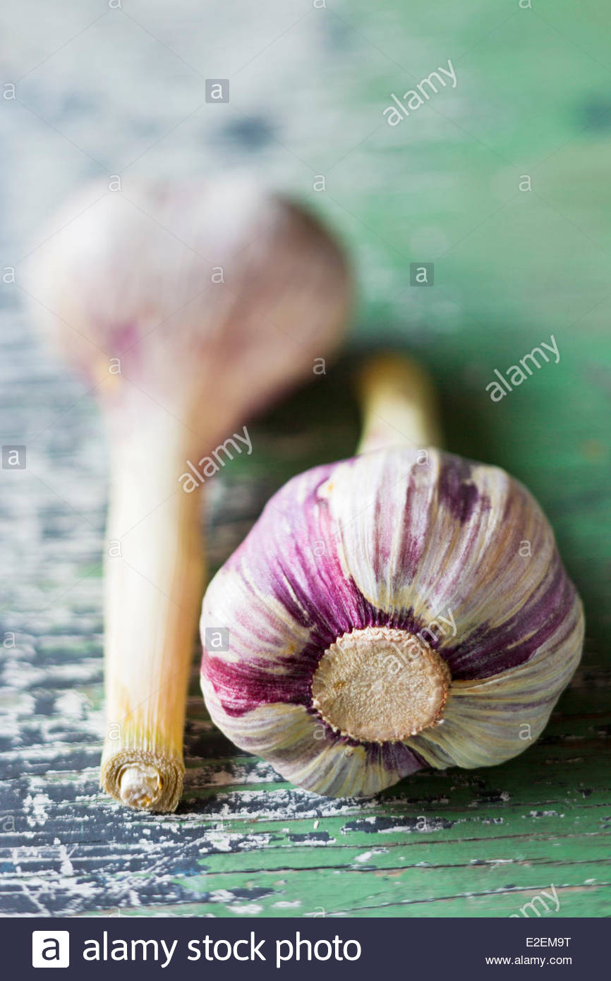 France, Tarn, Lautrec pink garlic of Lautrec fees, Label Rouge - Stock Image
