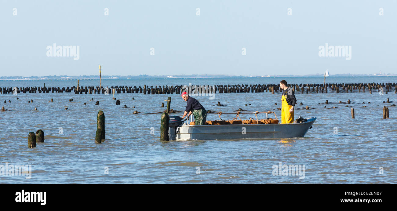 France, Vendee, L'Aiguillon sur Mer, dinghy in the mussel poles field - Stock Image