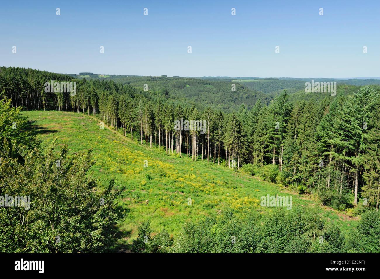 Belgium, Wallonia, Bouillon, forest far as the eye - Stock Image