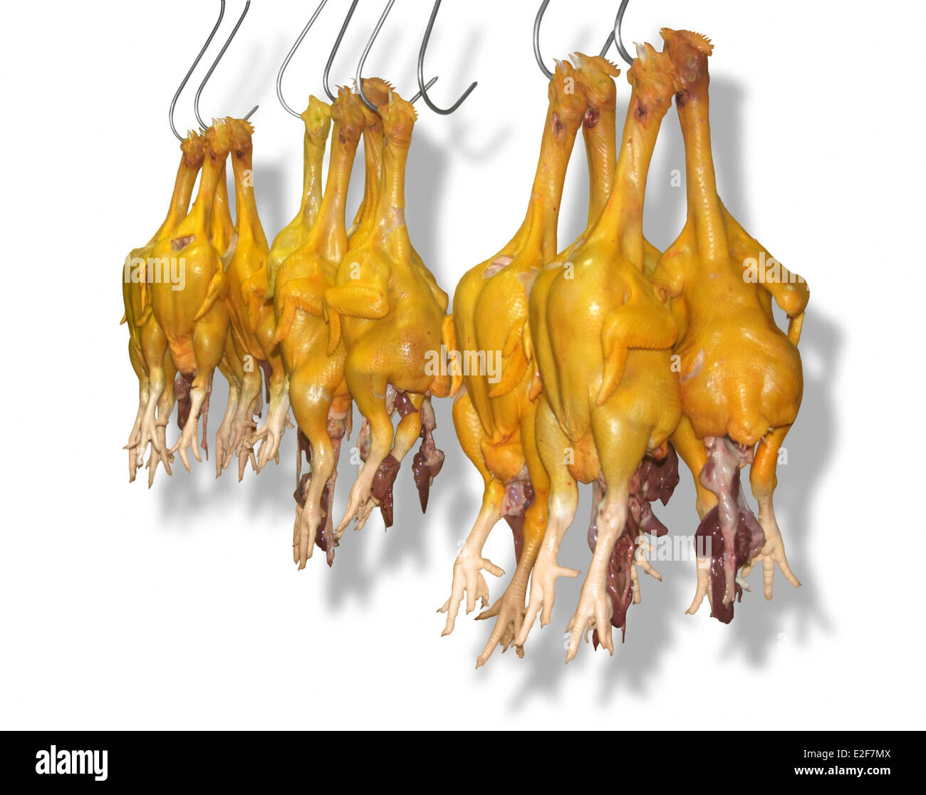 some plucked and gutted yellow chicken on hooks in front of white back with shadow - Stock Image