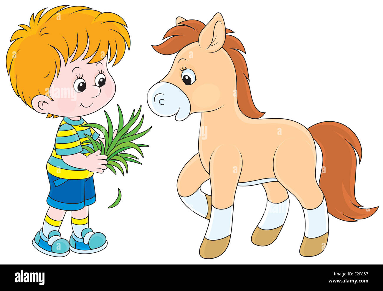 Little boy feeding a pony with grass - Stock Image