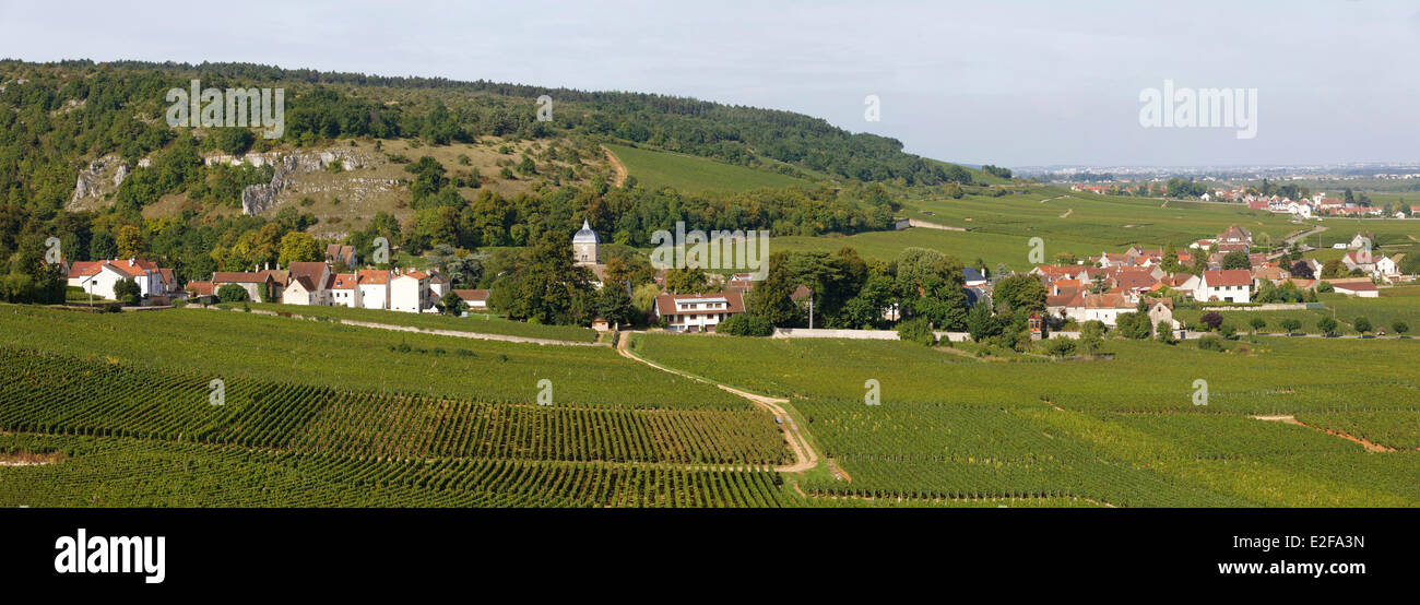 France, Cote d'Or, Chambolle Musigny, Bourgogne vineyard, cote de Nuits vineyard - Stock Image