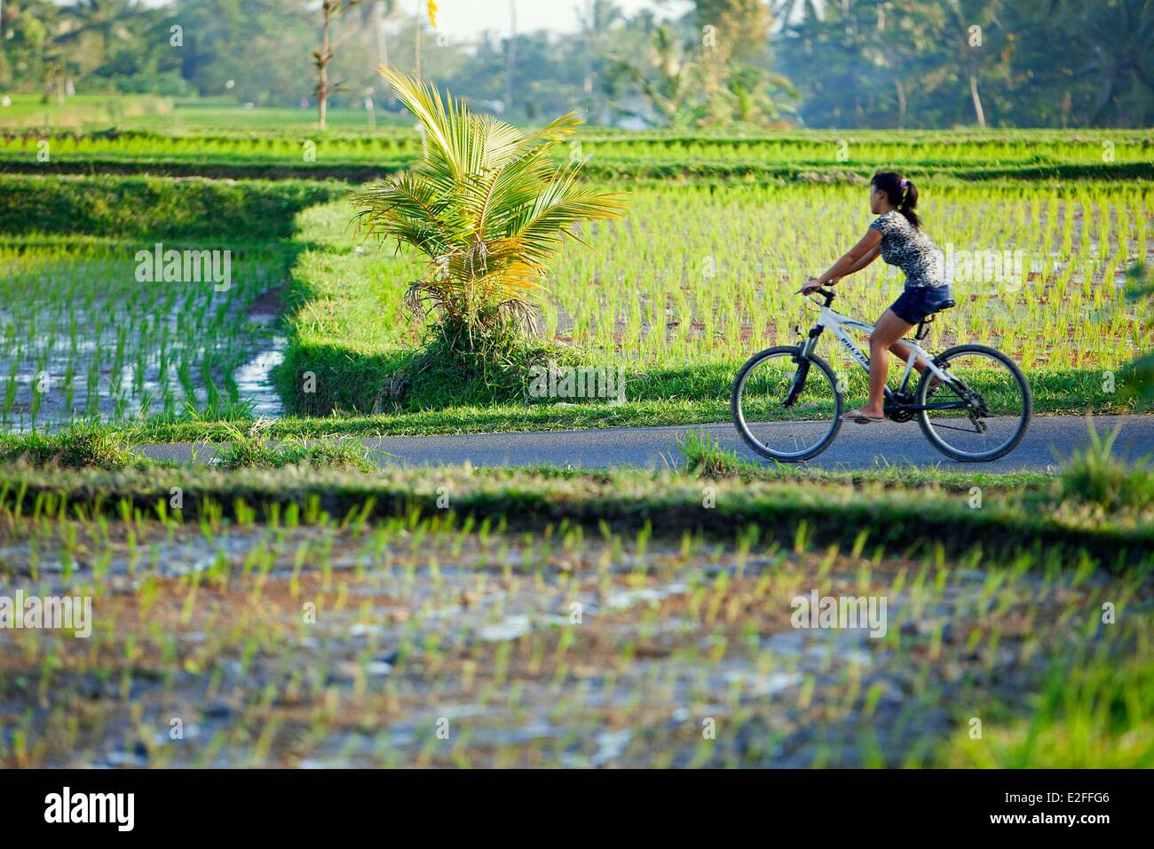 Indonesia, Bali, near Ubud, Tegalalang Stock Photo