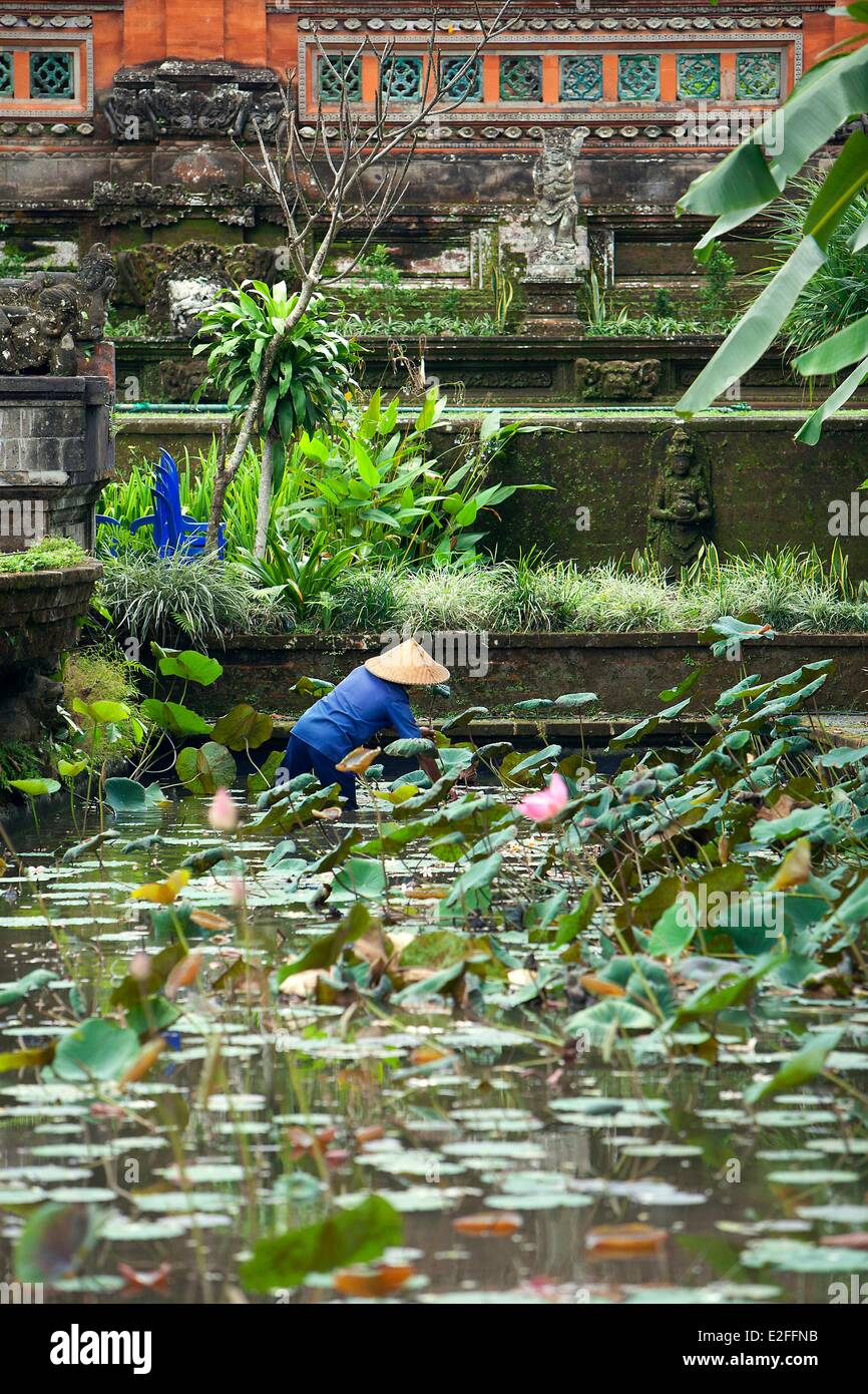 Indonesia, Bali, Ubud, Royal Temple, pond with lotus flowers - Stock Image