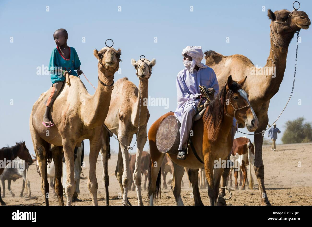 Chad, Sahel, Bisney, waterhole where herds congregate - Stock Image