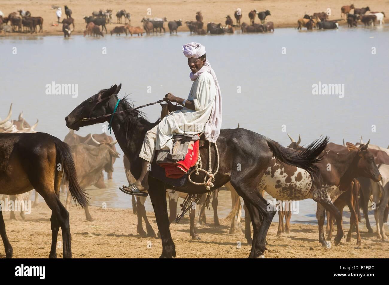 Chad, Sahel, Bisney, waterhole where herds congregate - Stock Image