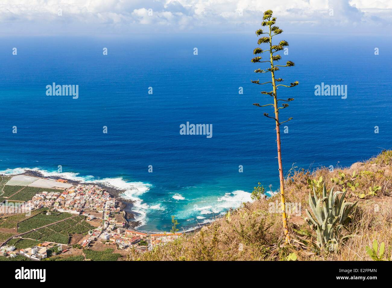 Spain Canary Islands Tenerife Island Adeje American agave with in the background La Caleta and banana - Stock Image