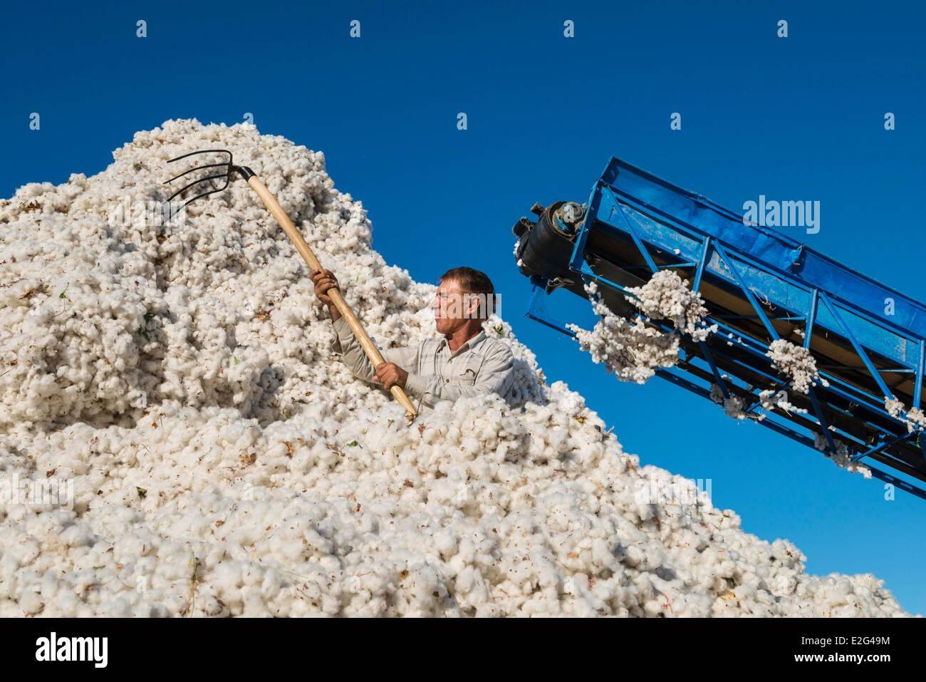 Uzbekistan Silk Road Khorezm province a worker in a cotton (Gossypium sp.) platform - Stock Image