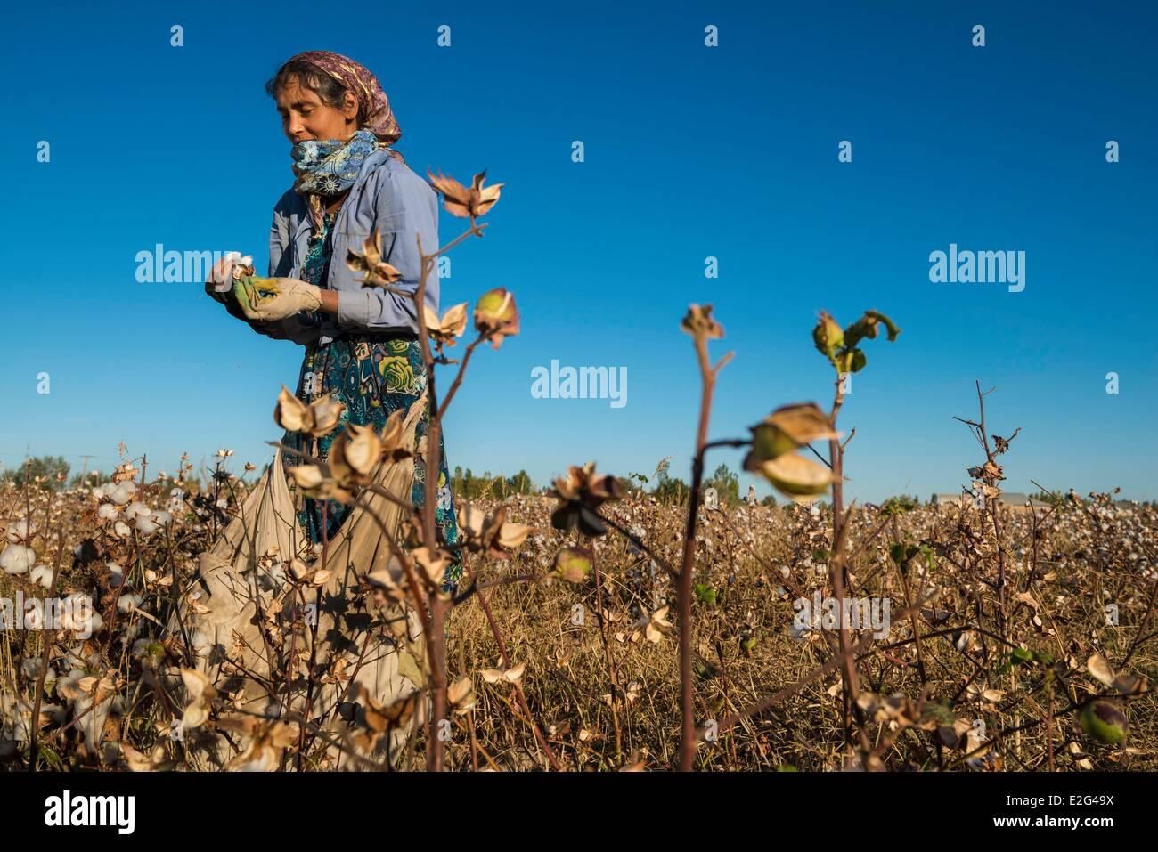 Uzbekistan Silk Road Khorezm province women picking cotton - Stock Image