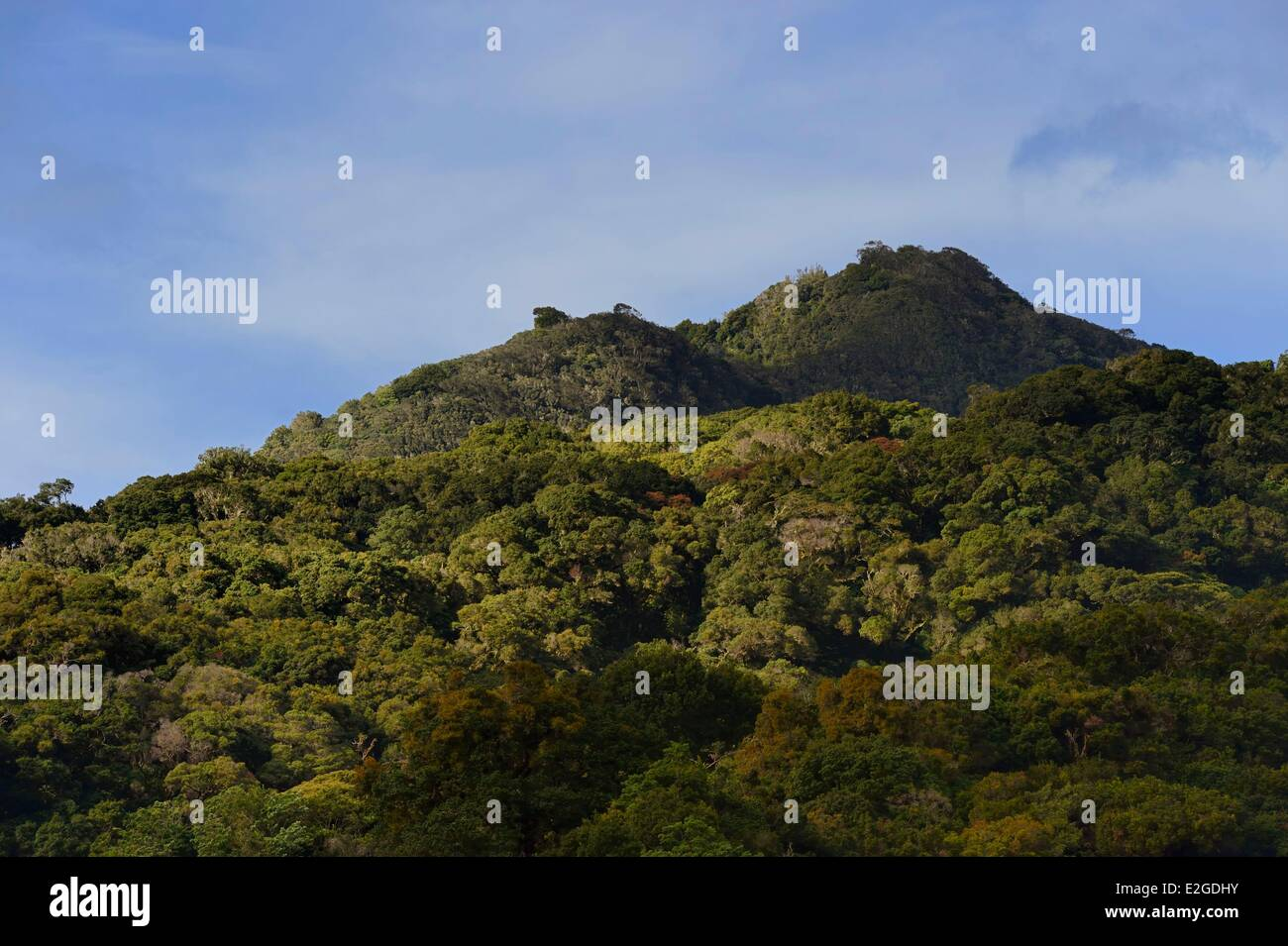 Panama Chiriqui province Boquete slopes of Volcan Baru national park - Stock Image